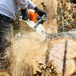 Tree Felling Pros, Tree Cutting Service, Tree Trimming Service, Tree Removal Service